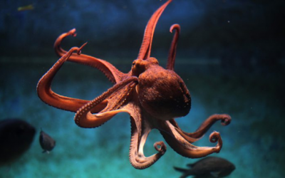 The Neuroscience of Metaphors is like an Octopus
